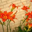 flower for website